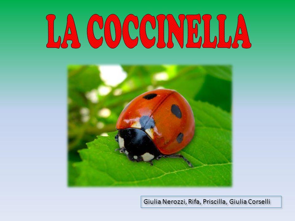 LA COCCINELLA Giulia Nerozzi, Rifa, Priscilla, Giulia Corselli