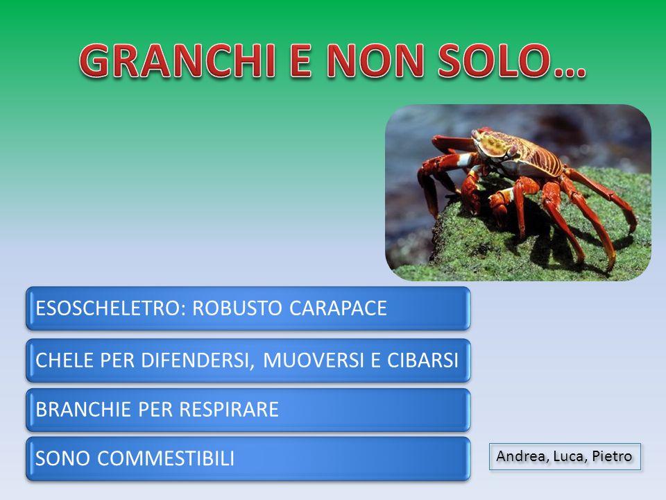 GRANCHI E NON SOLO… Andrea, Luca, Pietro