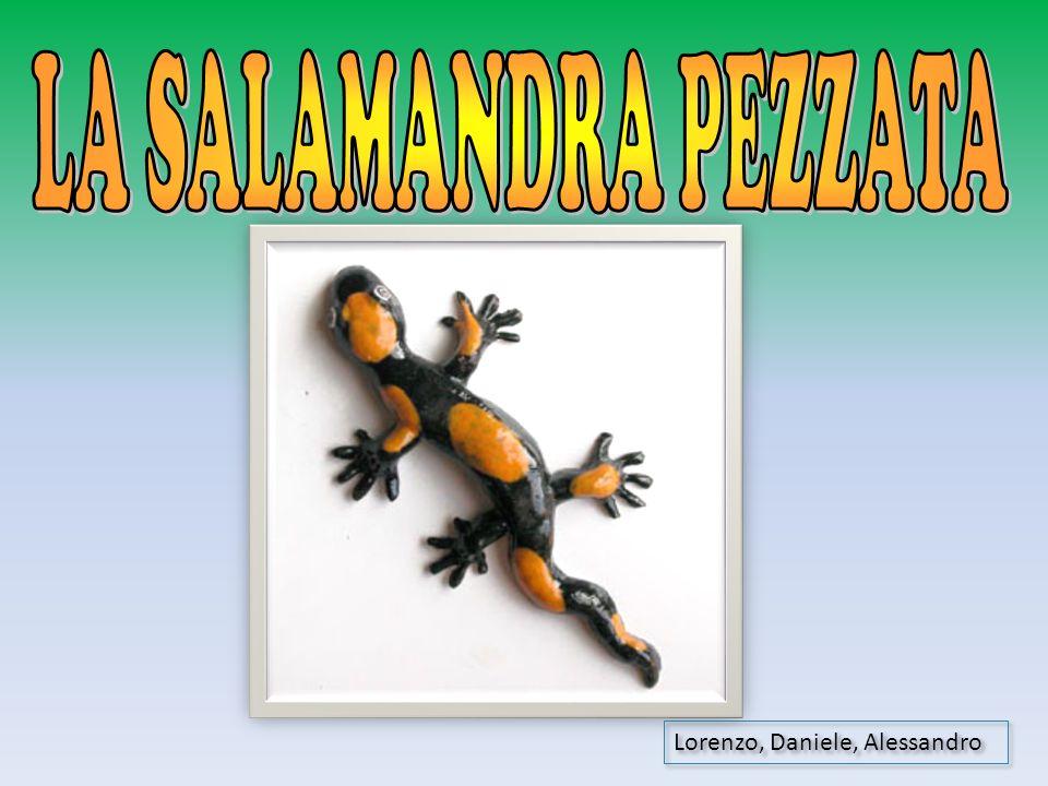 LA SALAMANDRA PEZZATA Lorenzo, Daniele, Alessandro