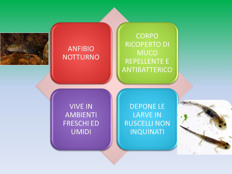 CORPO RICOPERTO DI MUCO REPELLENTE E ANTIBATTERICO