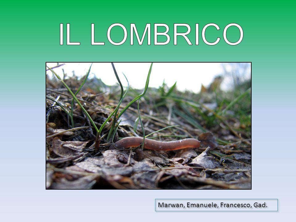 IL LOMBRICO Marwan, Emanuele, Francesco, Gad.