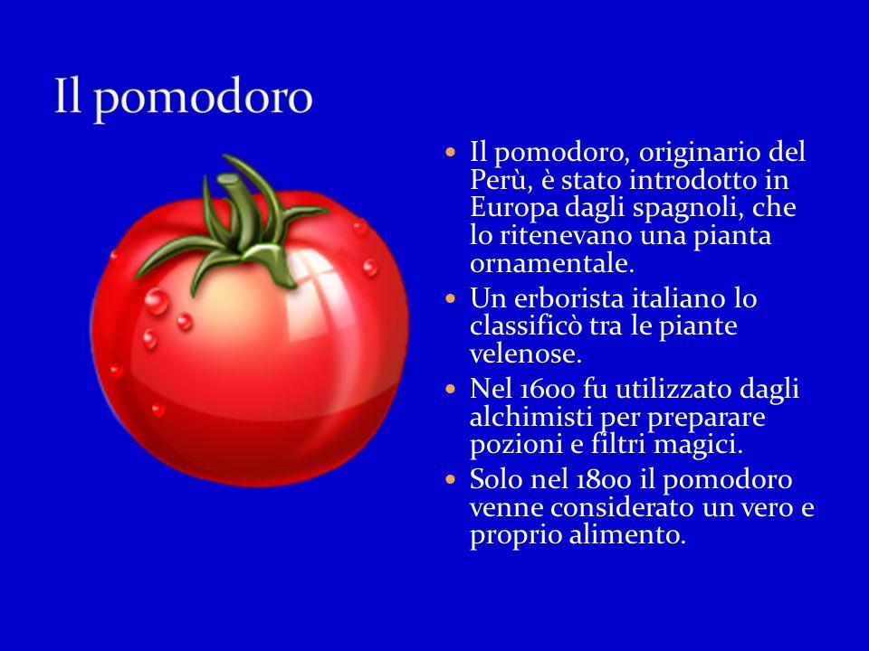 Il pomodoro Il pomodoro, originario del Perù, è stato introdotto in Europa dagli spagnoli, che lo ritenevano una pianta ornamentale.