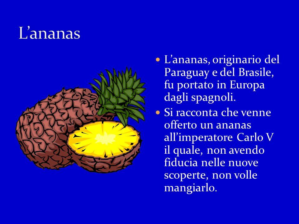 L'ananas L'ananas, originario del Paraguay e del Brasile, fu portato in Europa dagli spagnoli.