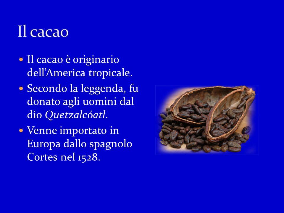 Il cacao Il cacao è originario dell'America tropicale.