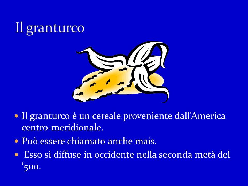 Il granturco Il granturco è un cereale proveniente dall'America centro-meridionale. Può essere chiamato anche mais.