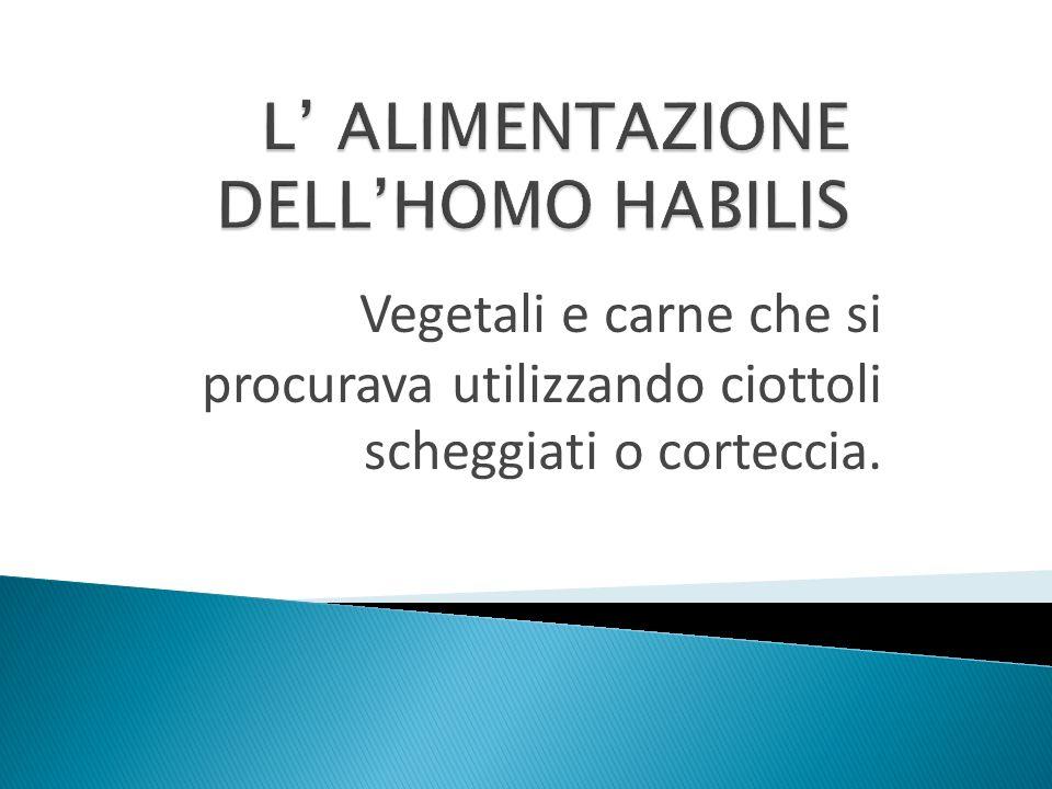 L' ALIMENTAZIONE DELL'HOMO HABILIS