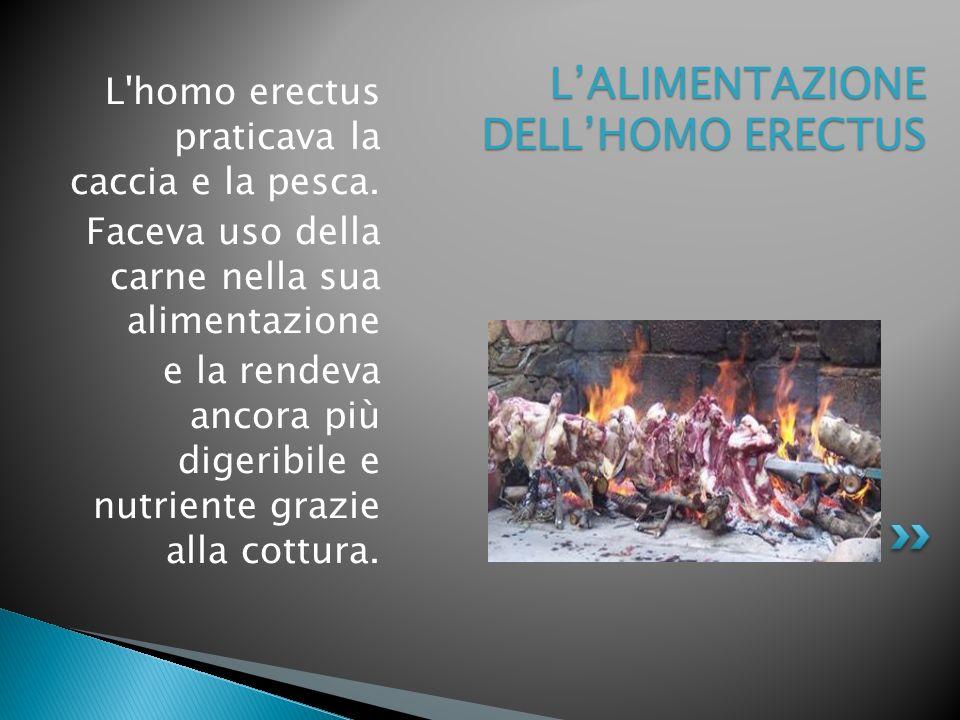 L'ALIMENTAZIONE DELL'HOMO ERECTUS
