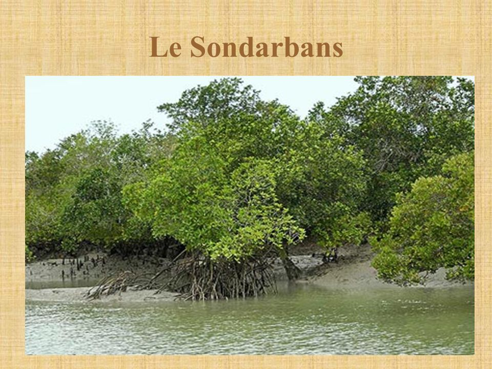 Le Sondarbans