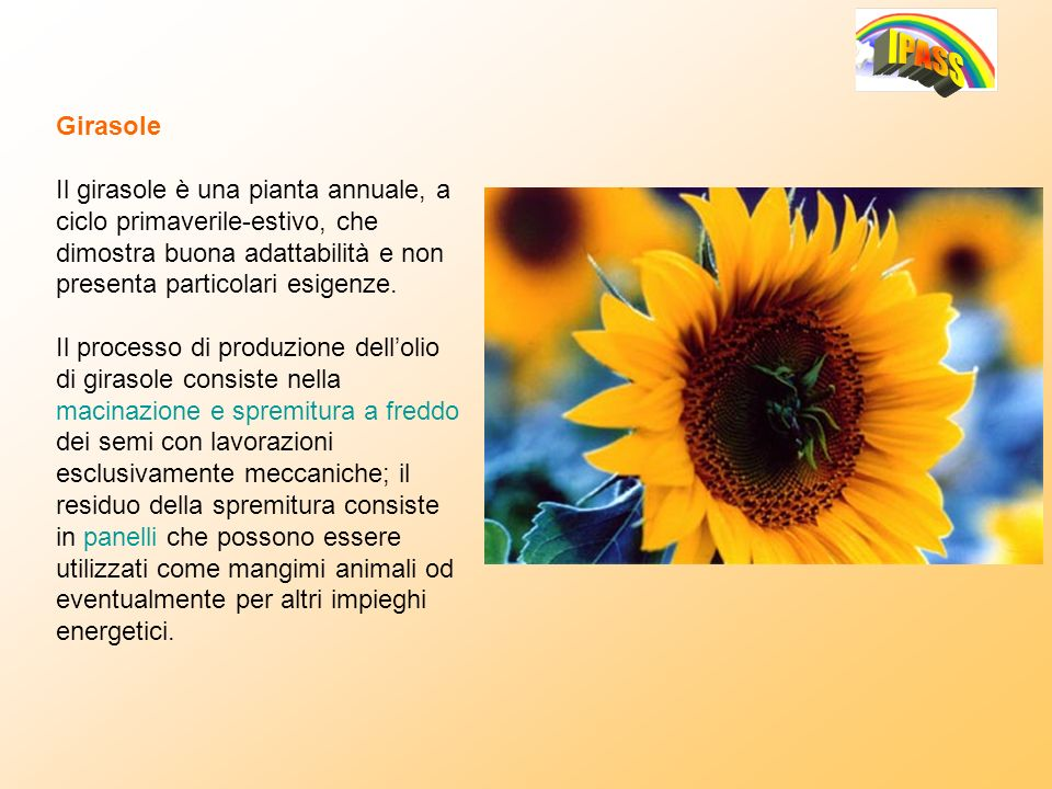 Girasole Il girasole è una pianta annuale, a ciclo primaverile-estivo, che dimostra buona adattabilità e non presenta particolari esigenze.