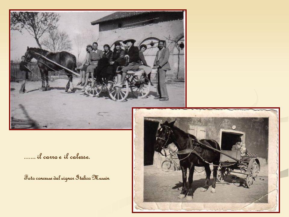 ...... il carro e il calesse. Foto concesse dal signor Italico Mussin