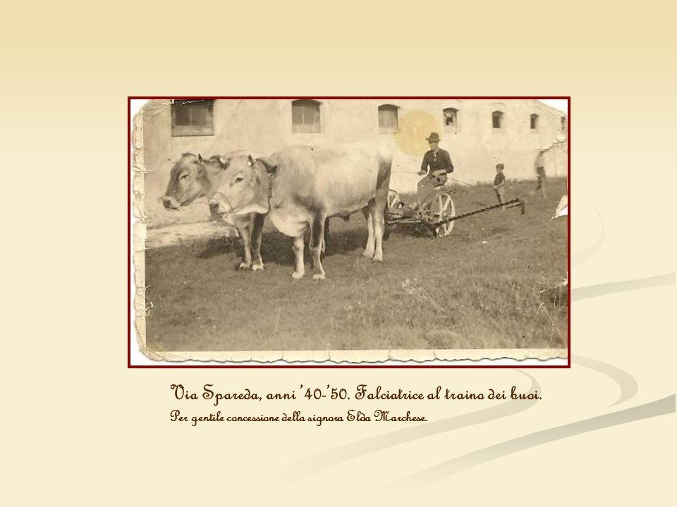 Via Spareda, anni '40-'50. Falciatrice al traino dei buoi.