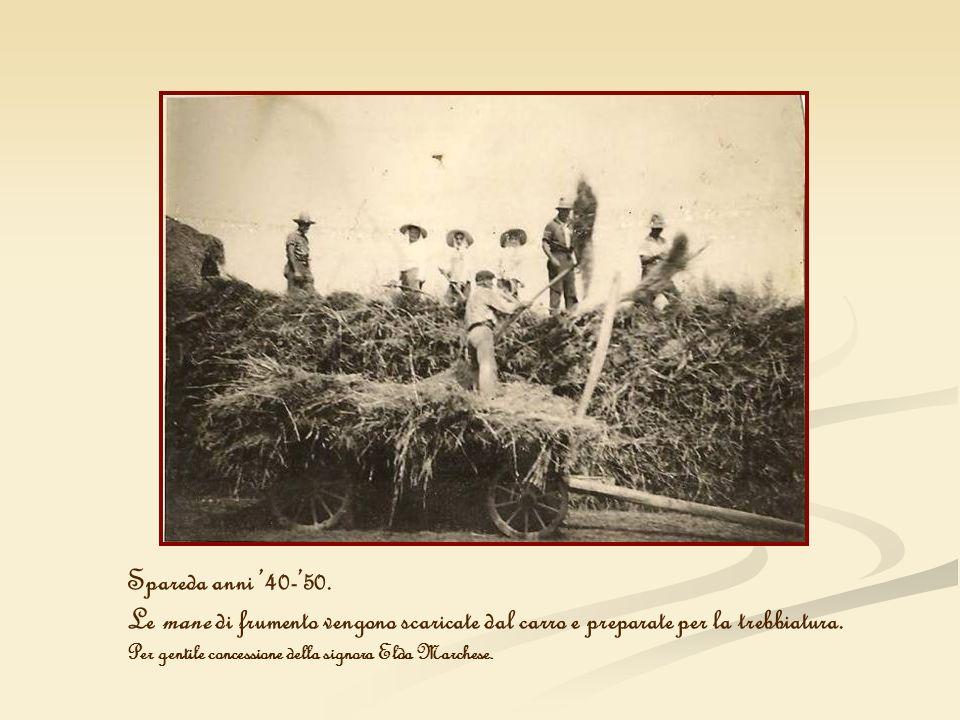 Spareda anni '40-'50. Le mane di frumento vengono scaricate dal carro e preparate per la trebbiatura.