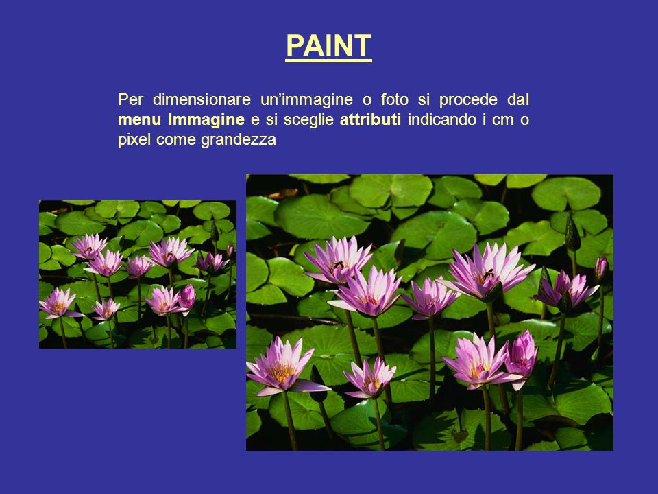 PAINT Per dimensionare un'immagine o foto si procede dal menu Immagine e si sceglie attributi indicando i cm o pixel come grandezza.