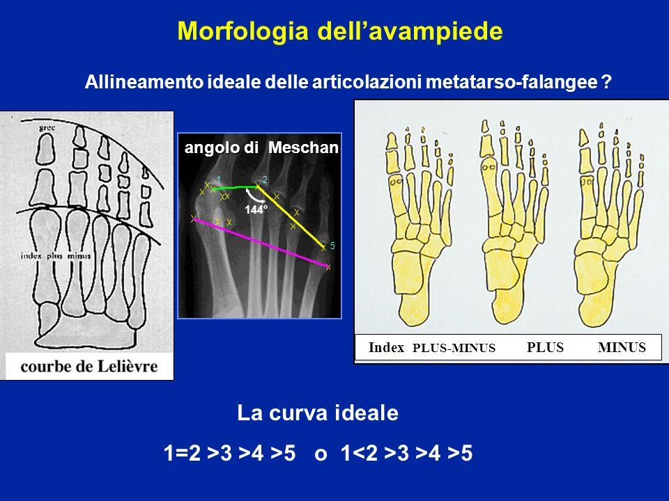 Morfologia dell'avampiede