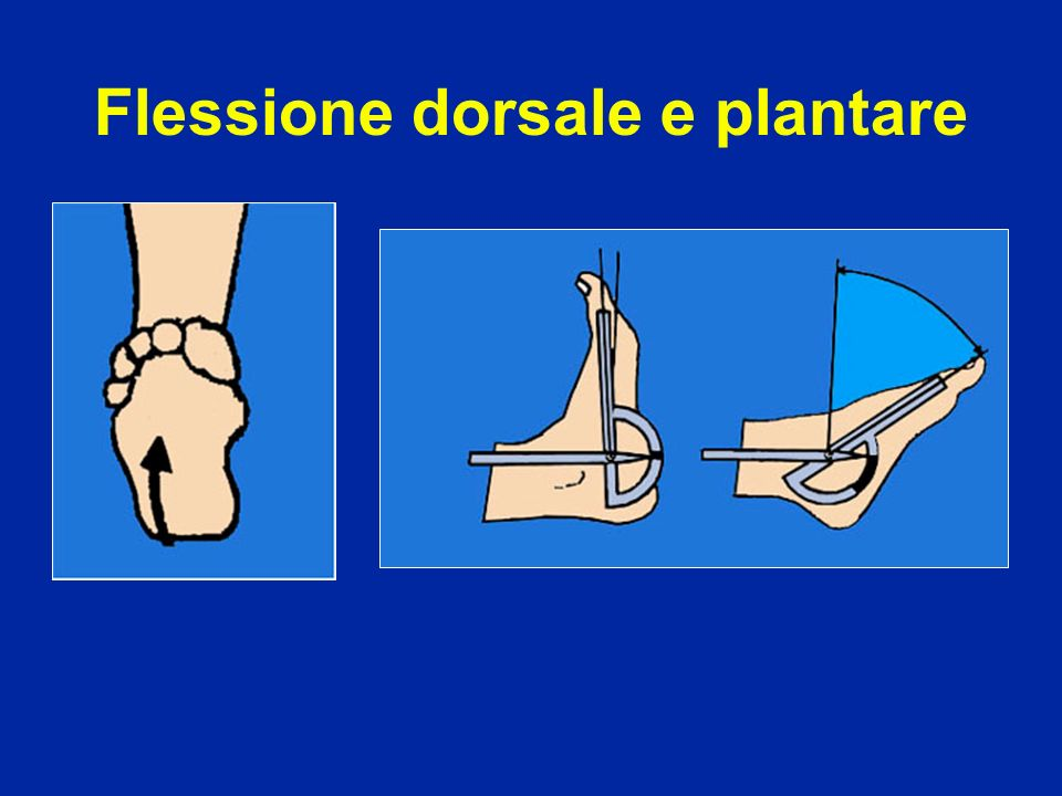 Flessione dorsale e plantare