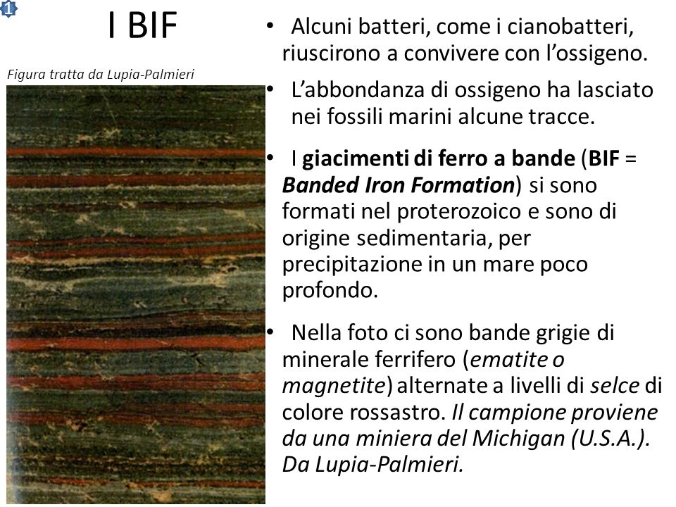 1 I BIF. Alcuni batteri, come i cianobatteri, riuscirono a convivere con l'ossigeno. Figura tratta da Lupia-Palmieri.