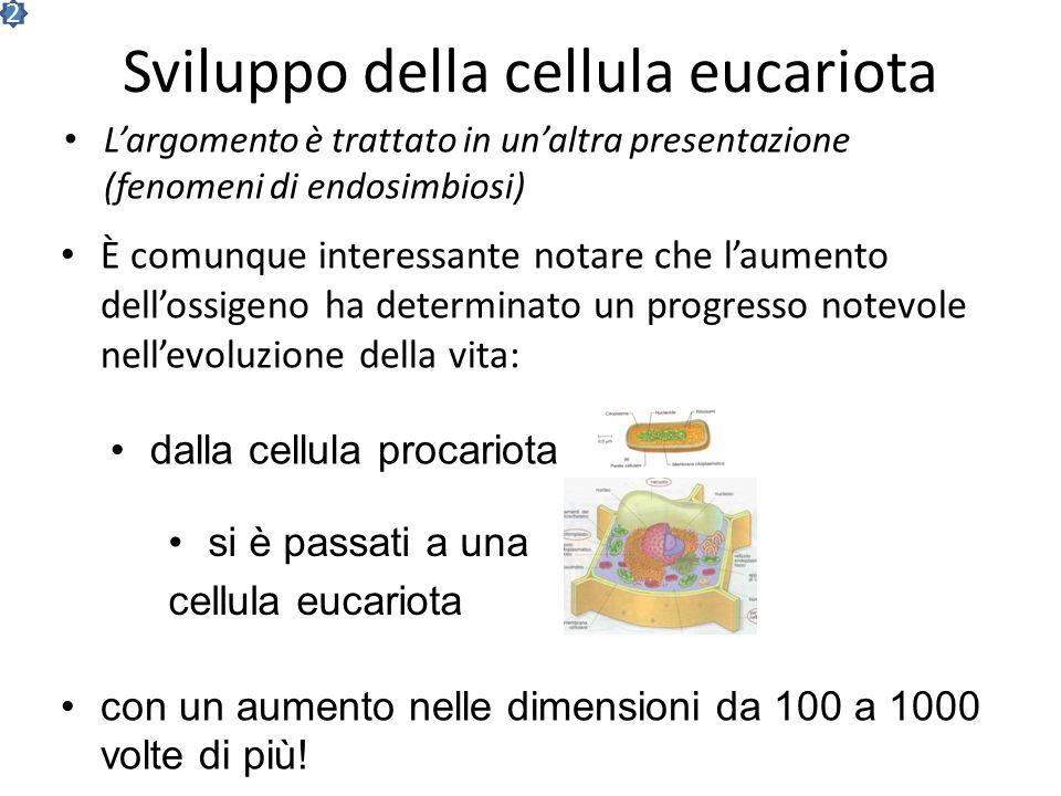 Sviluppo della cellula eucariota