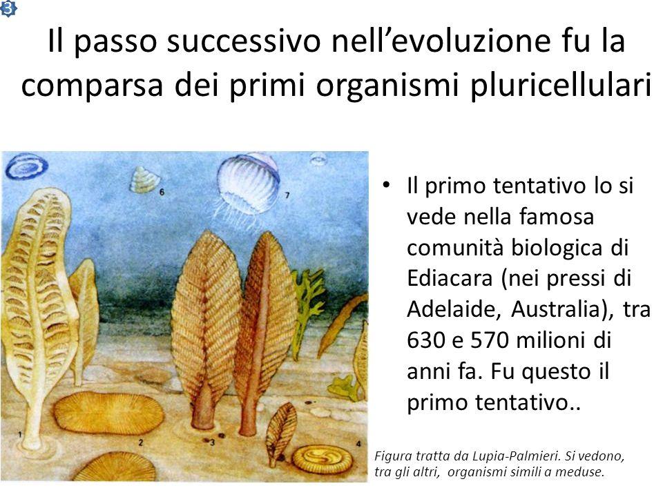 3 Il passo successivo nell'evoluzione fu la comparsa dei primi organismi pluricellulari.