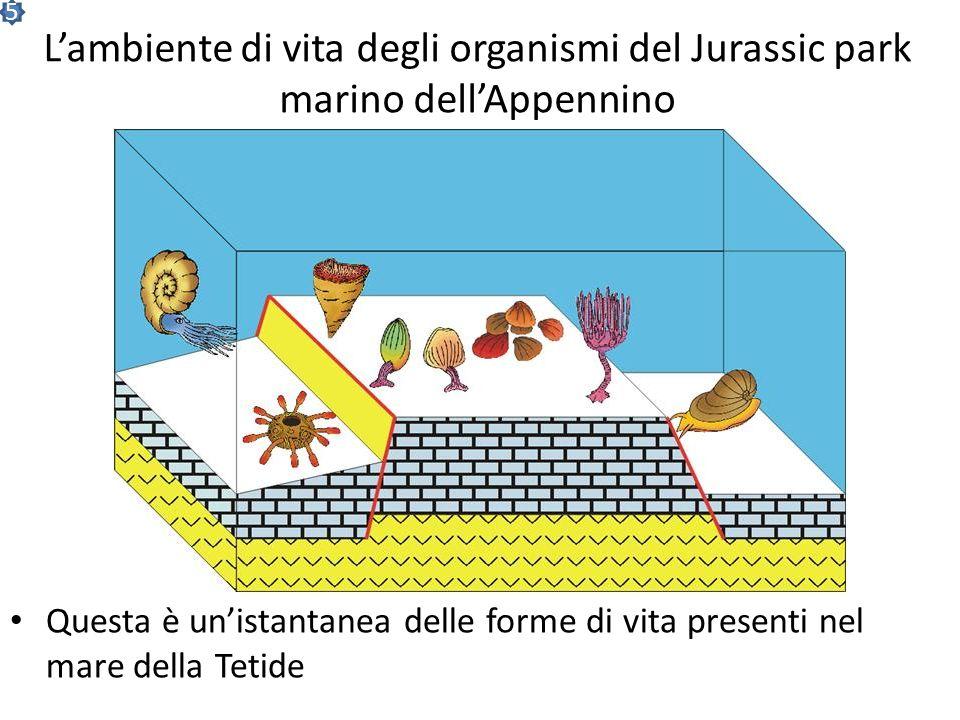 5 L'ambiente di vita degli organismi del Jurassic park marino dell'Appennino.