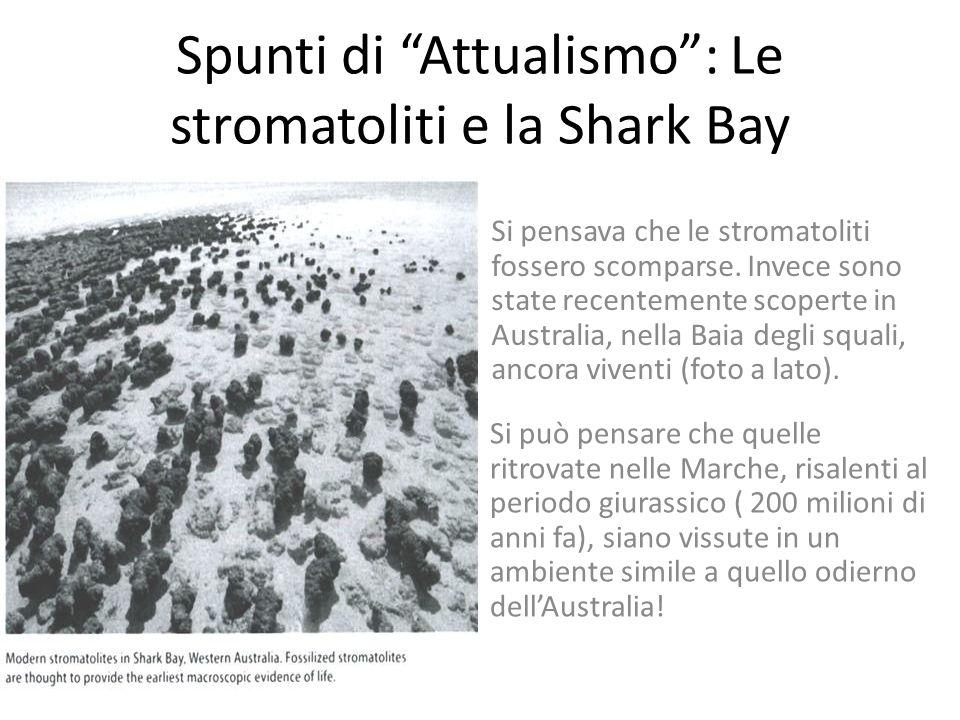 Spunti di Attualismo : Le stromatoliti e la Shark Bay