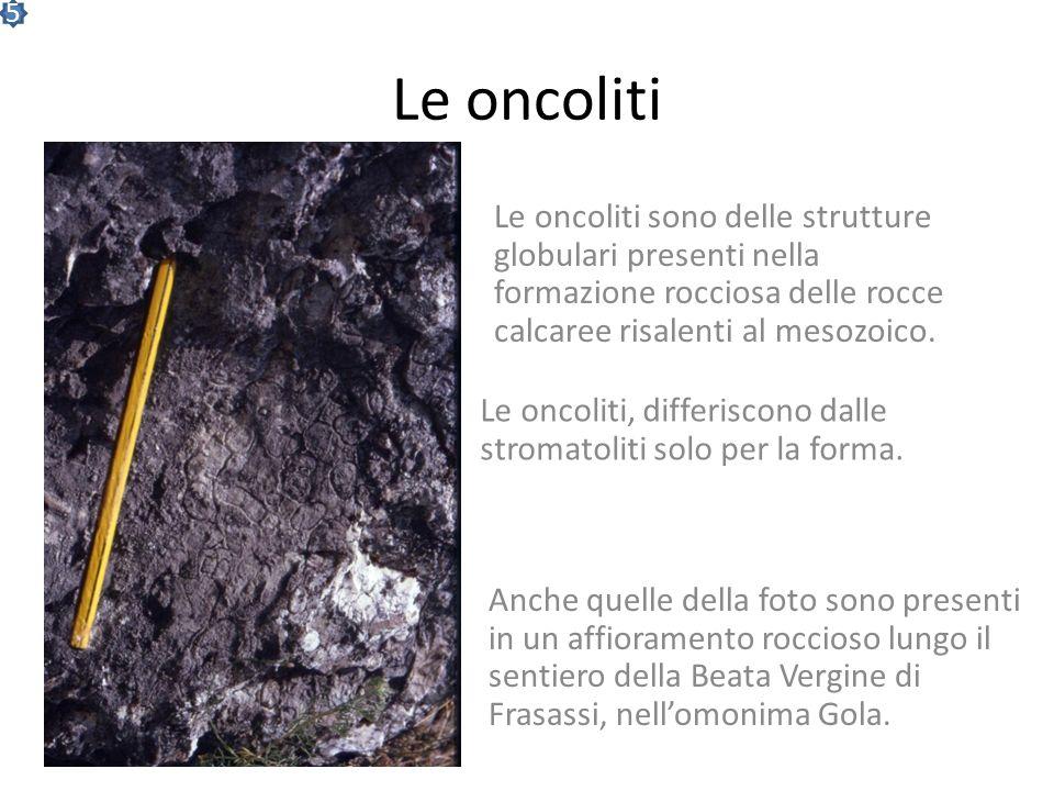 5 Le oncoliti. Le oncoliti sono delle strutture globulari presenti nella formazione rocciosa delle rocce calcaree risalenti al mesozoico.
