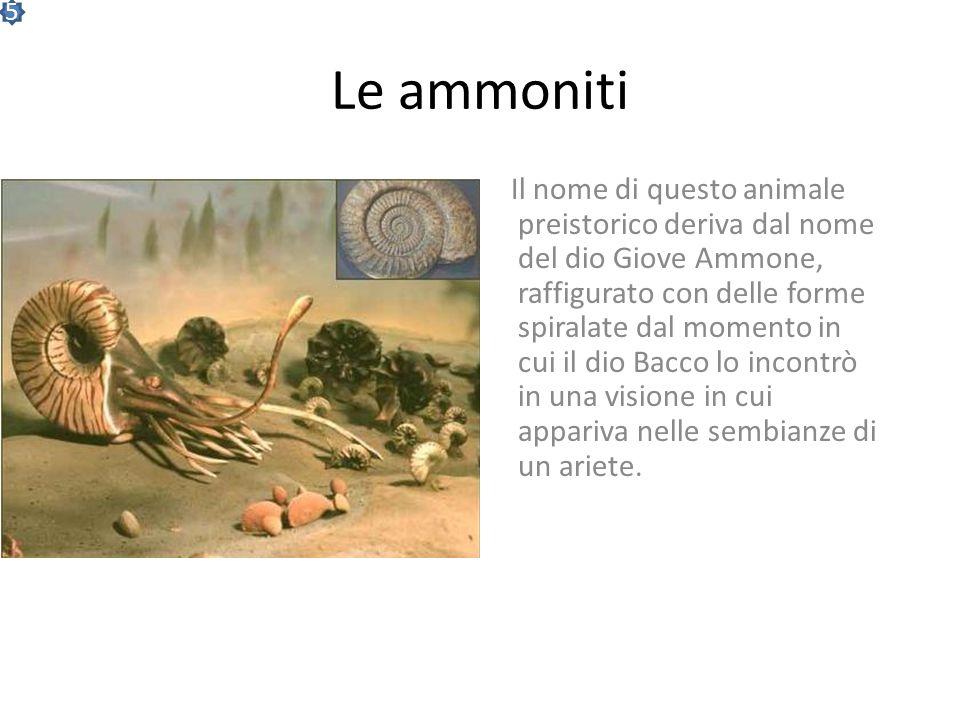 5 Le ammoniti.