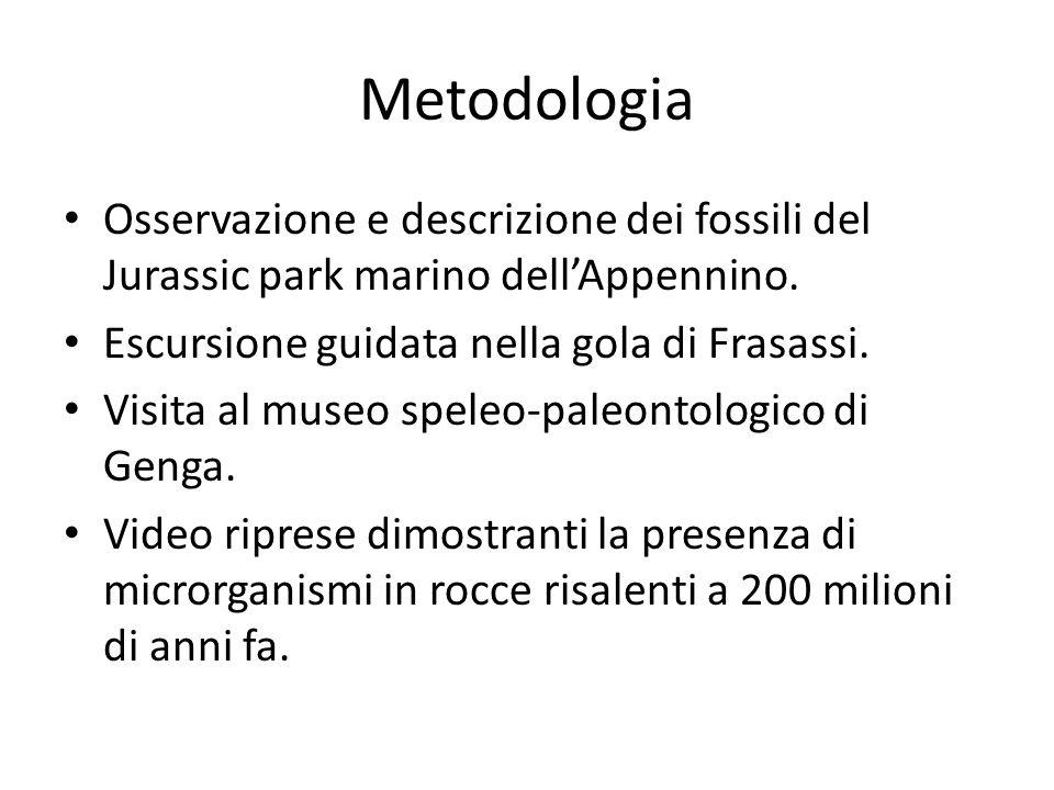 Metodologia Osservazione e descrizione dei fossili del Jurassic park marino dell'Appennino. Escursione guidata nella gola di Frasassi.