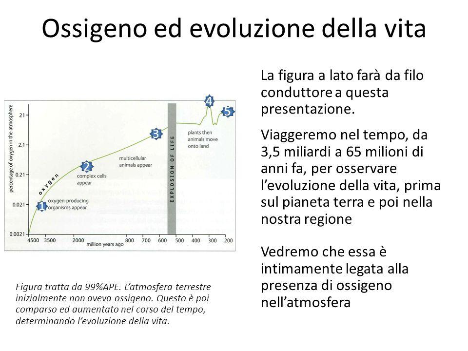 Ossigeno ed evoluzione della vita