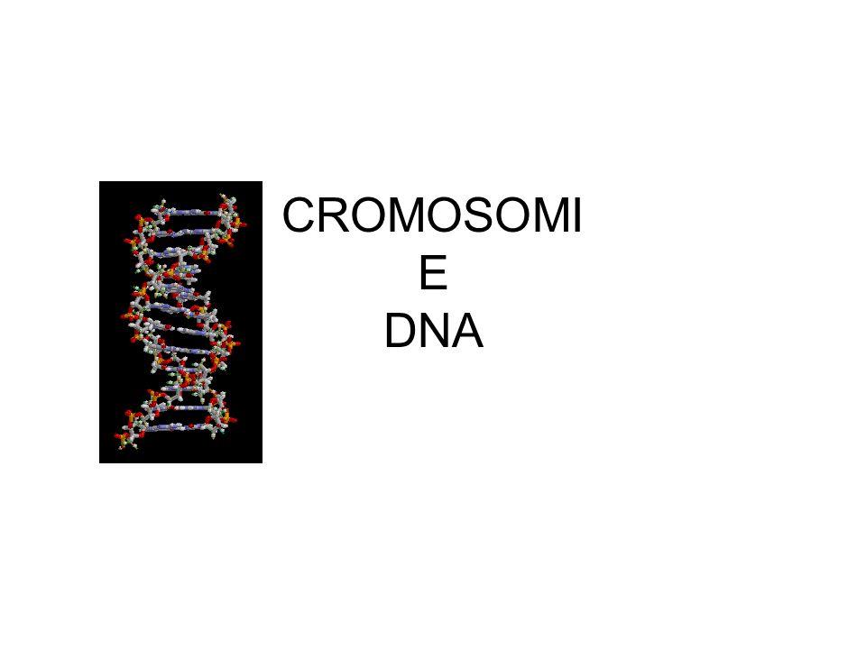 CROMOSOMI E DNA