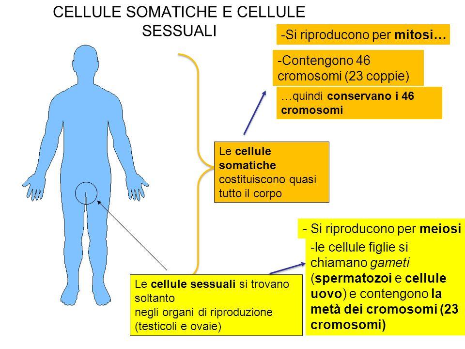 CELLULE SOMATICHE E CELLULE SESSUALI