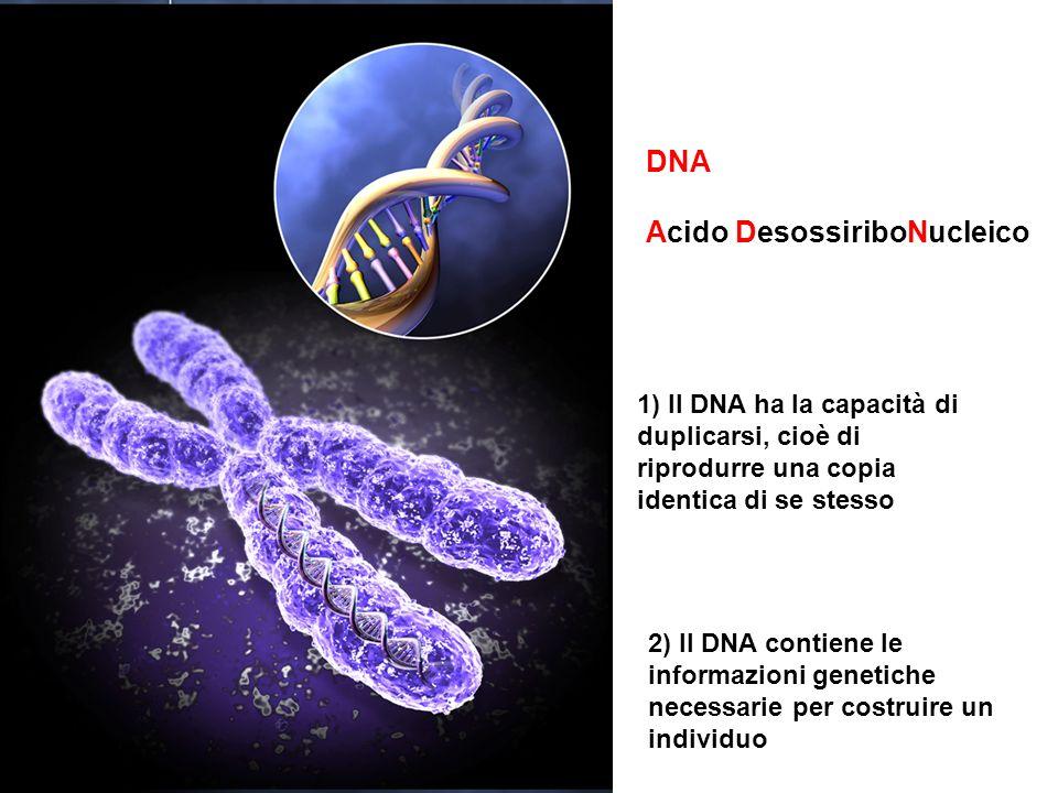 Acido DesossiriboNucleico