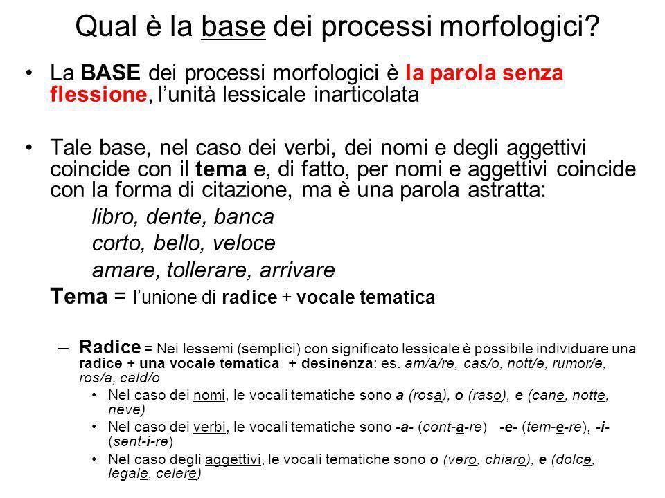 Qual è la base dei processi morfologici