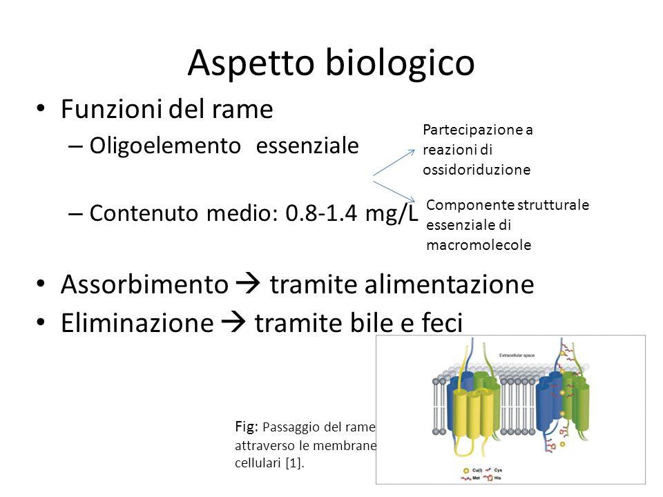 Aspetto biologico Funzioni del rame