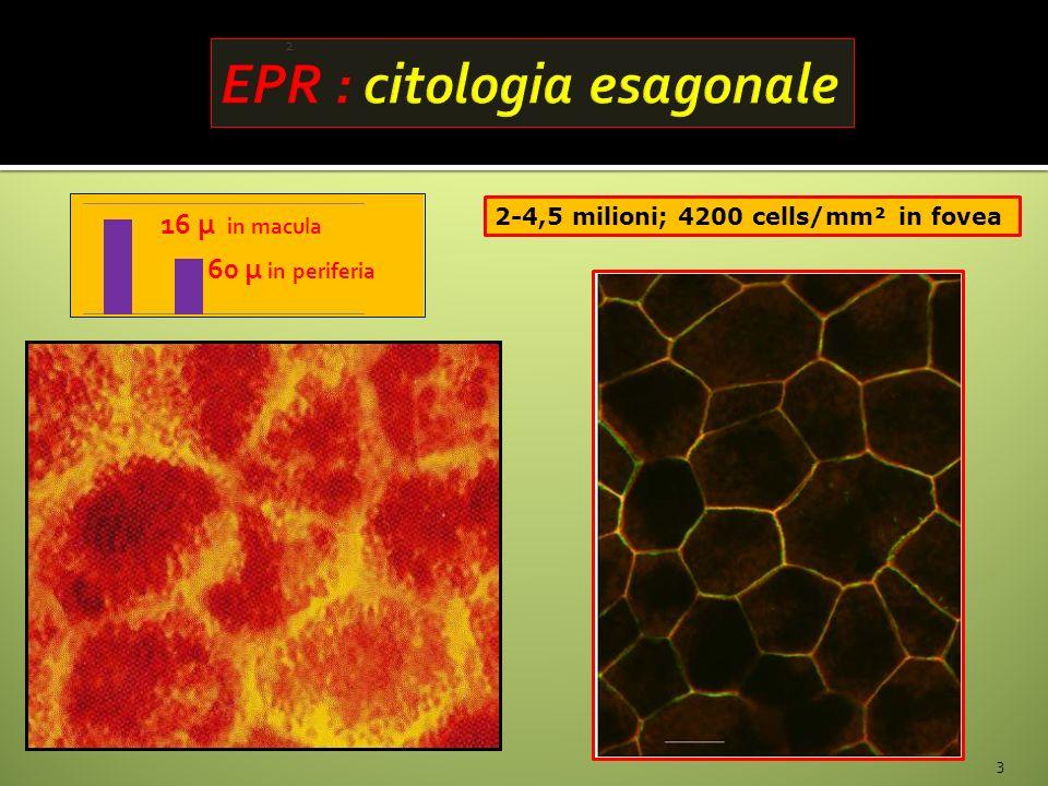 EPR : citologia esagonale