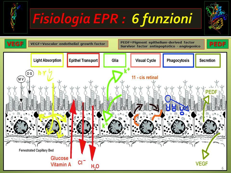 Fisiologia EPR : 6 funzioni