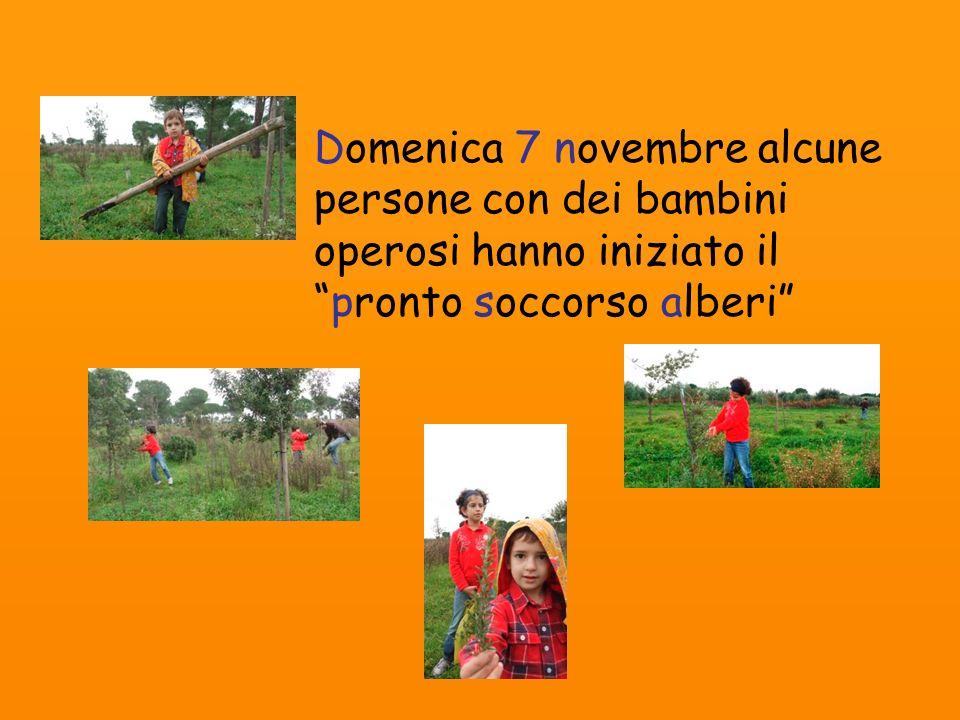 Domenica 7 novembre alcune persone con dei bambini operosi hanno iniziato il pronto soccorso alberi