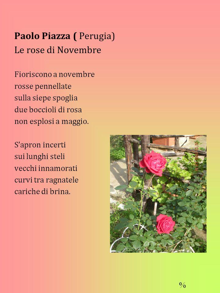Paolo Piazza ( Perugia) Le rose di Novembre