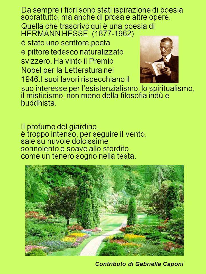 Quella che trascrivo qui è una poesia di HERMANN HESSE (1877-1962)