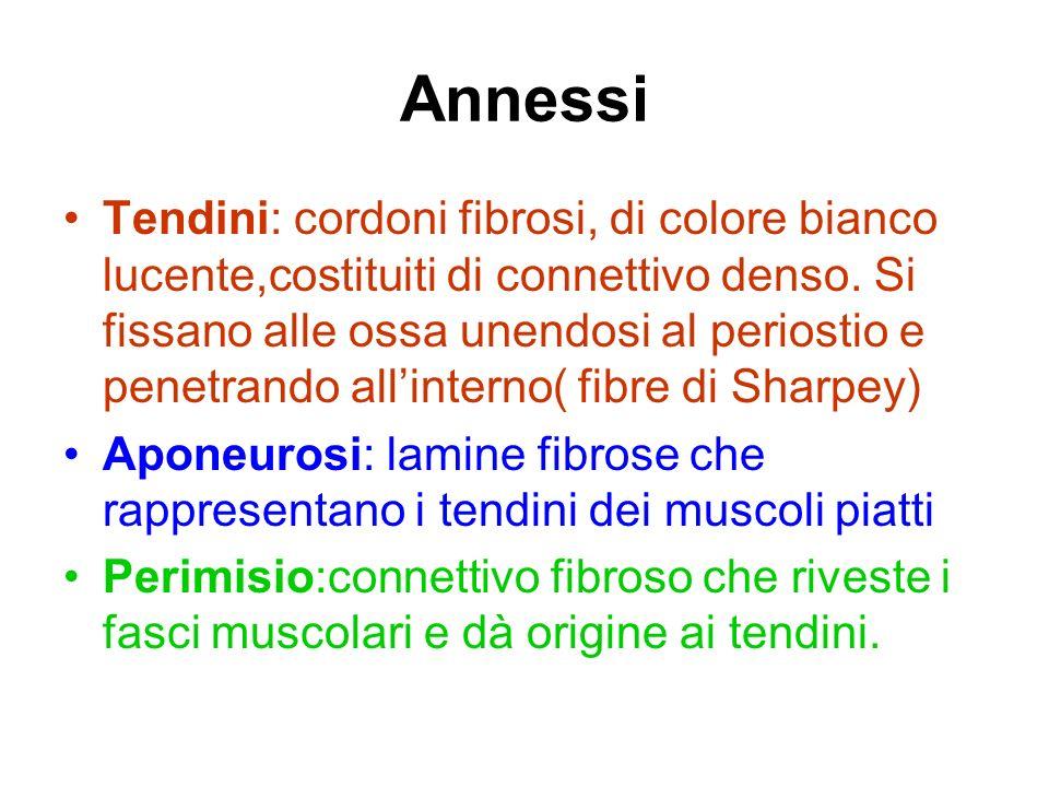 Annessi
