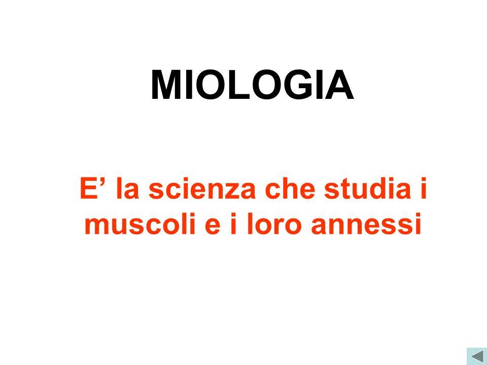 E' la scienza che studia i muscoli e i loro annessi