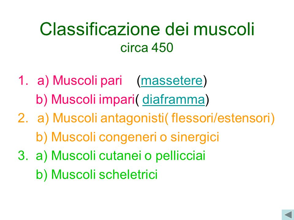 Classificazione dei muscoli circa 450