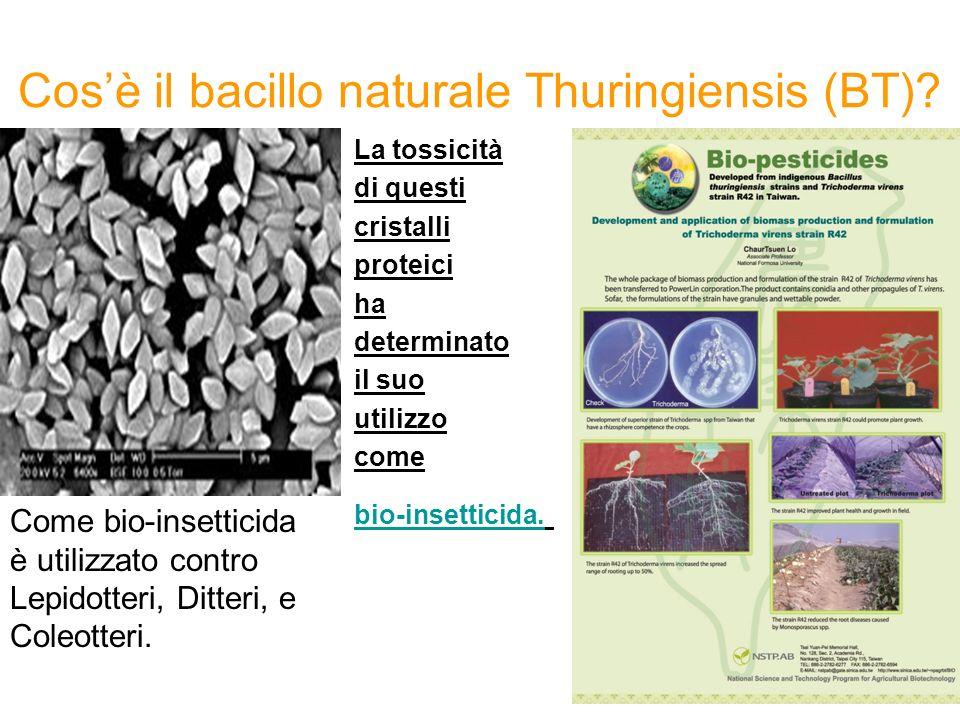 Cos'è il bacillo naturale Thuringiensis (BT)
