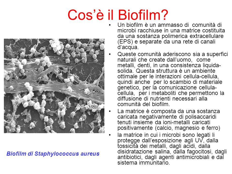 Cos'è il Biofilm