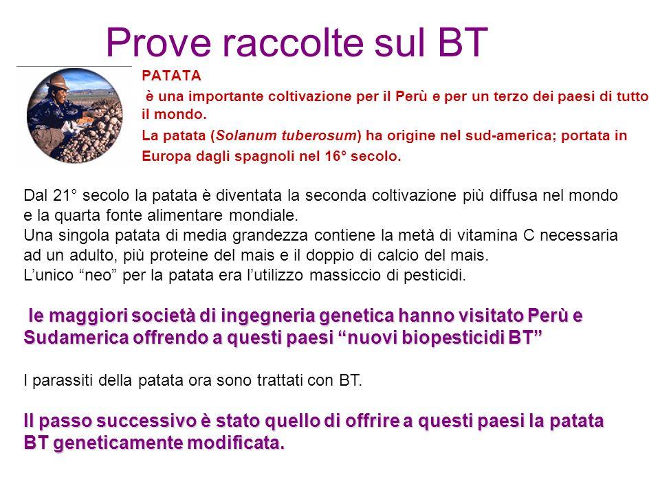 Prove raccolte sul BT PATATA. è una importante coltivazione per il Perù e per un terzo dei paesi di tutto il mondo.