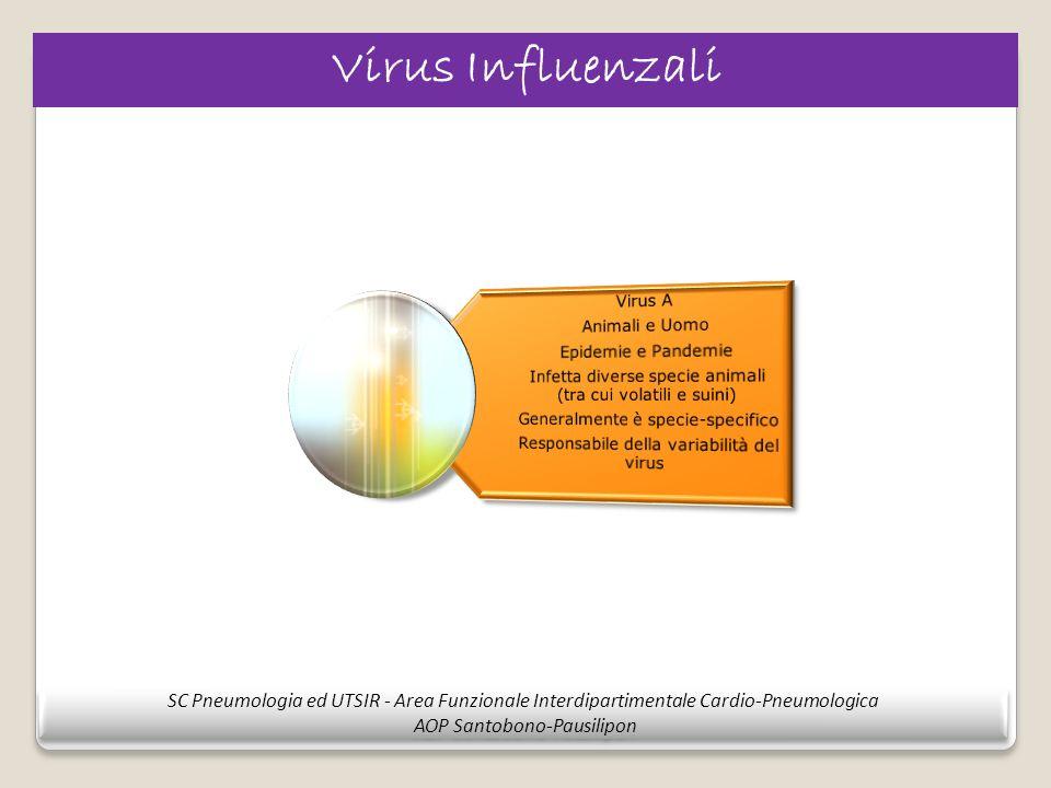 Virus Influenzali Infetta diverse specie animali (tra cui volatili e suini) Responsabile della variabilità del virus.