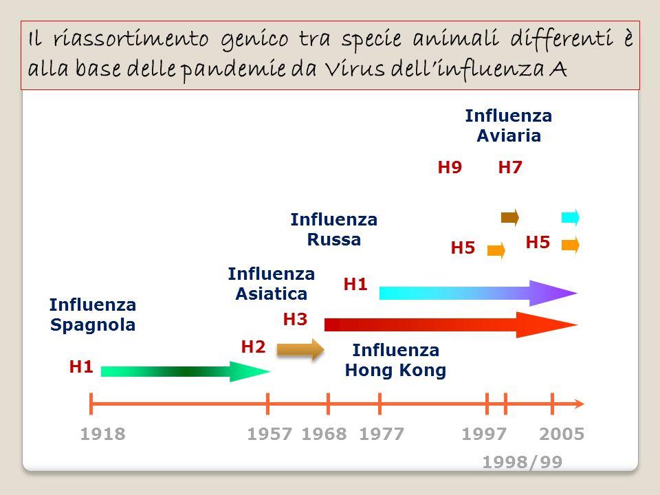 Il riassortimento genico tra specie animali differenti è alla base delle pandemie da Virus dell'influenza A