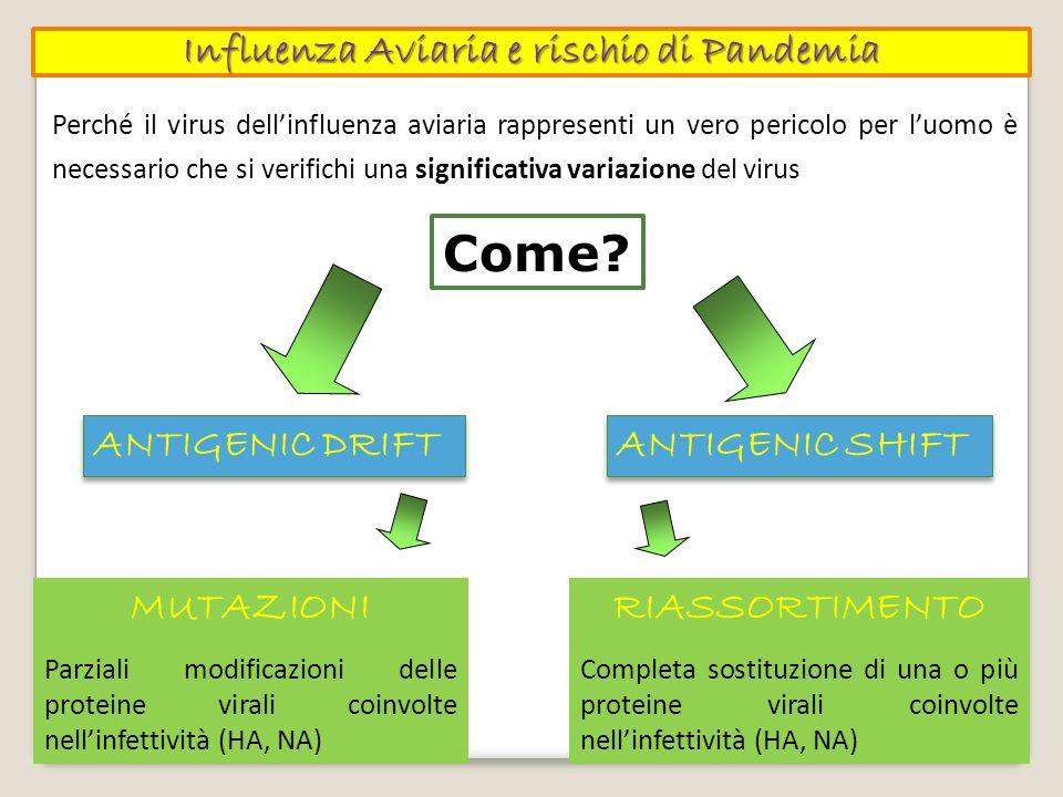 Influenza Aviaria e rischio di Pandemia