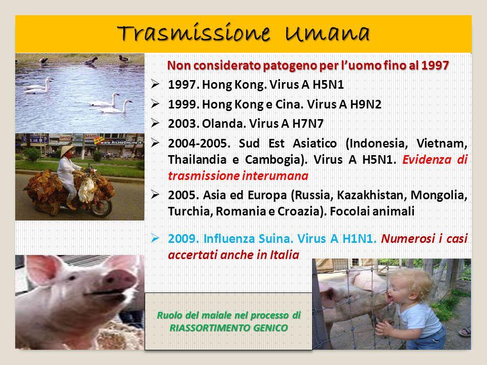 Trasmissione Umana Non considerato patogeno per l'uomo fino al 1997