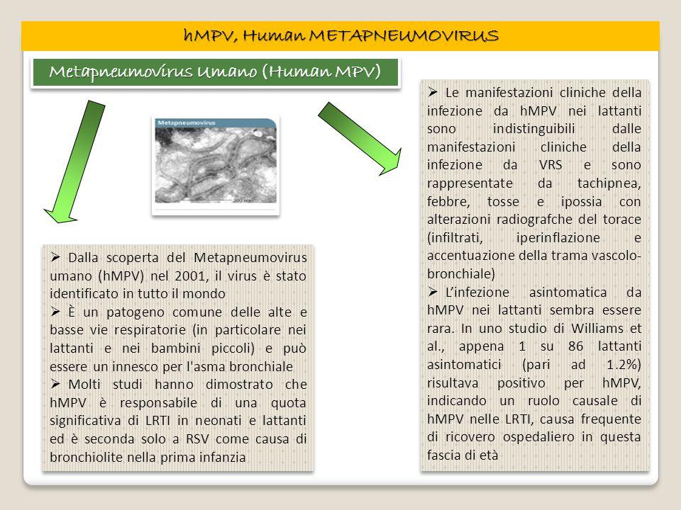 hMPV, Human METAPNEUMOVIRUS Metapneumovirus Umano (Human MPV)