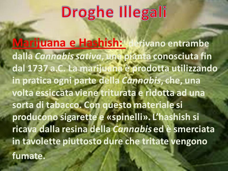Droghe Illegali
